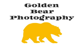 Golden Bear Photo